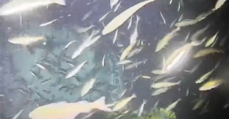 Screenshot from live camera outside Microsoft's undersea data center.
