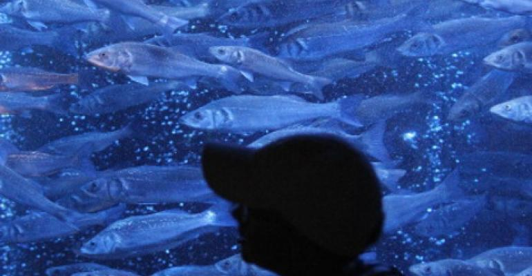Project Seeks to Combine Sustainable Fish Farm and Data Center