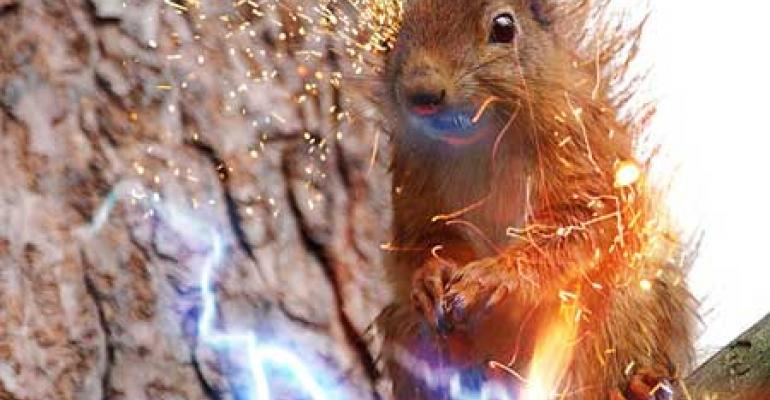 Surviving Electric Squirrels and UPS Failures