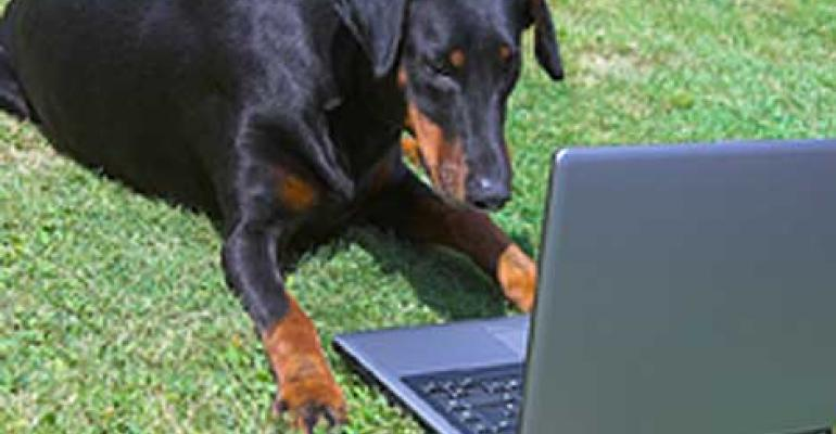 Pets in the Clouds: CyberlinkASP Cloudifies Veterinary Records